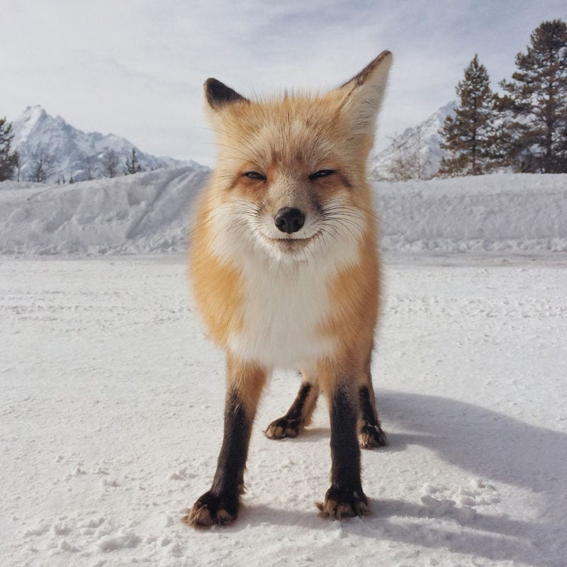 © Michael O'Neal   1. Platz Animals   IPPA