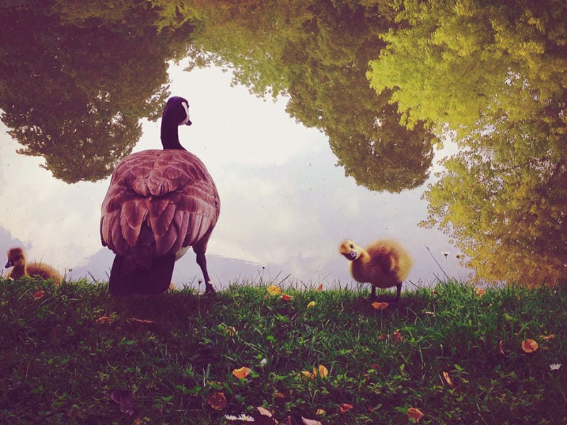 © Naomi Wu | 2. Platz Animals | IPPA
