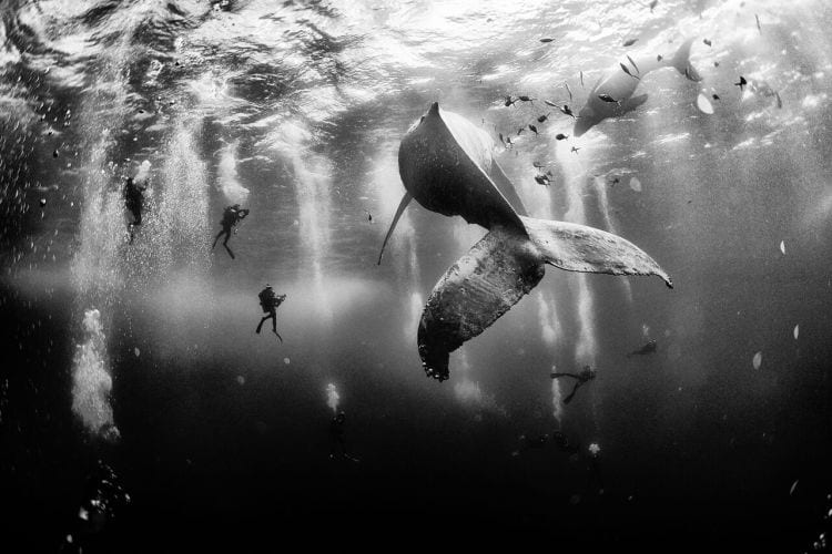 Grand Prize: Whale Whisperers   Photo and caption by Anuar Patjane Floriuk / National Geographic Traveler Photo Contest Diving with a humpback whale and her newborn calf whil e they cruise around Roca Partida ... in  the Revillagigedo [Islands], Mexico. This is an outst anding and unique place full of pelagic life, so  we need to accelerate the incorporation of the islands  into UNESCO as [a] natural heritage site in  order to increase the protection of the islands again st the prevailing illegal fishing corporations  and big-game fishing.