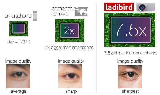 ladibird-01