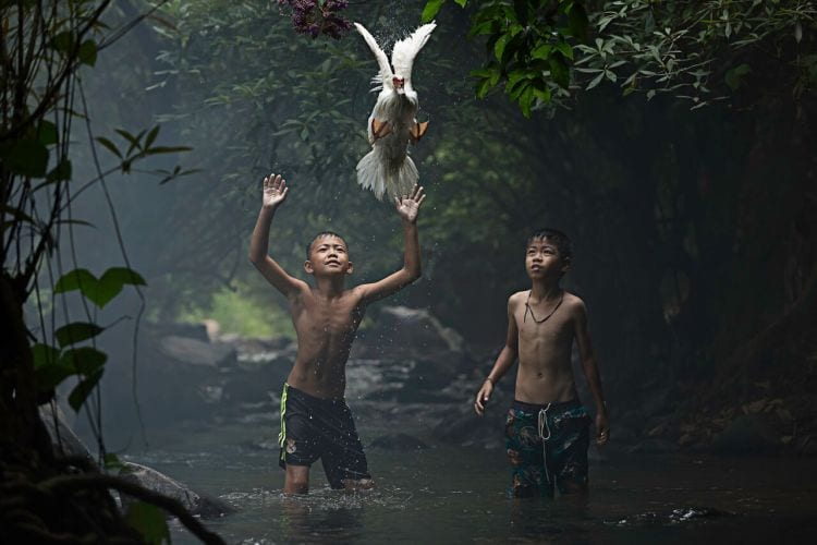 Catching a Duck 2 boys are trying to catch a duck at the stream of the waterfall. Photo and caption by Sarah Wouters/National Geographic Traveler Photo Contest